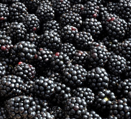 Blackberries from Hayton Farms at Ballard Farmers Market. Copyright Zachary D. Lyons.