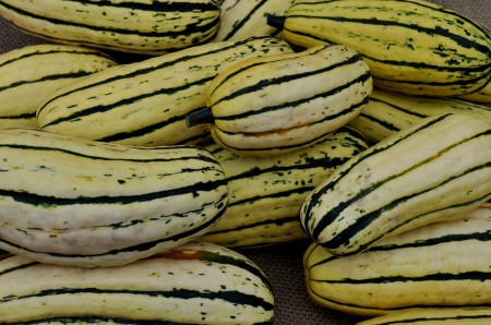Delicata winter squash from One Leaf Farm. Photo copyright 2013 by Zachary D. Lyons.