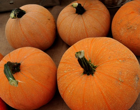 Winter Luxury pumpkins from One Leaf Farm at your Ballard Farmers Market. Copyright Zachary D. Lyons.