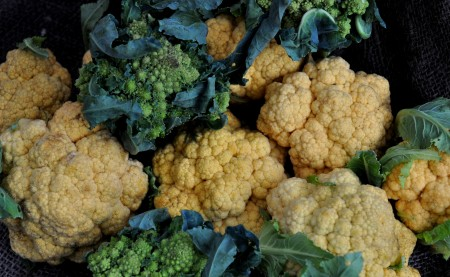 Cheddar cauliflower & romanesco from Oxbow Farm. Photo copyright 2013 by Zachary D. Lyons.