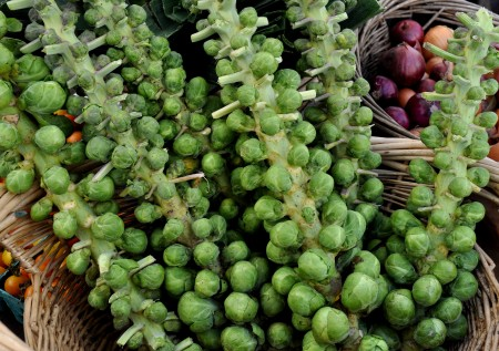 Brussels sprouts trees from Alm Hill Gardens. Photo copyright 2013 by Zachary D. Lyons.