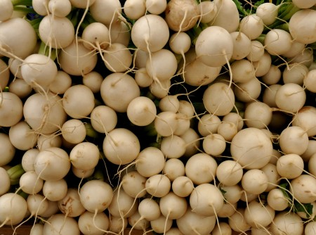 Japanese Wax turnips from Alm Hill Gardens. Photo copyright 2013 by Zachary D. Lyons.