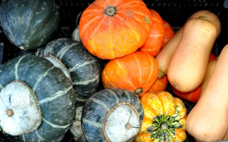 Winter squash from Boistfort Valley Farm. Photo copyright 2013 by Zachary D. Lyons.