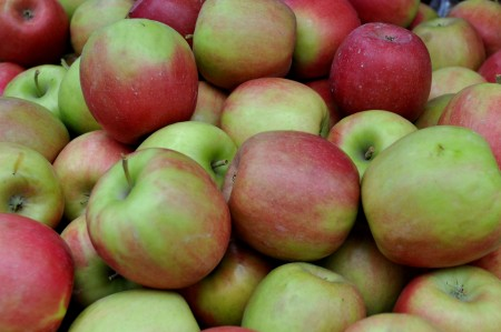 Pink Lady apples from Collins Family Orchards. Photo copyright 2013 by Zachary D. Lyons.