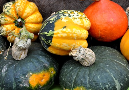 Winter squash from Growing Things Farm. Photo copyright 2013 by Zachary D. Lyons.