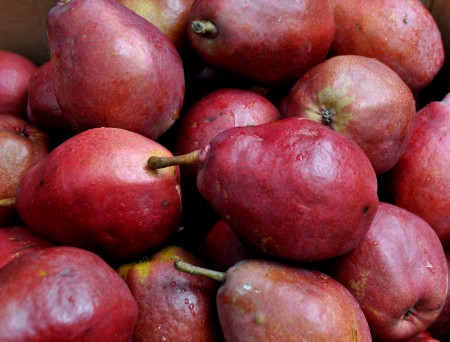 Purple Goddess pears from Jerzy Boyz. Photo copyright 2013 by Zachary D. Lyons.