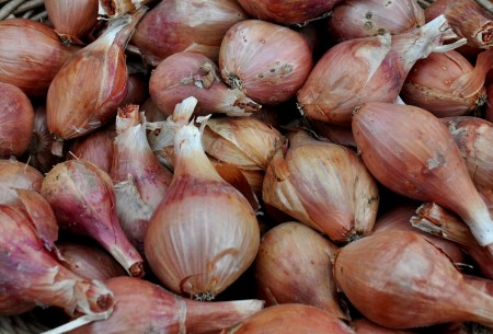 Shallots from One Leaf Farm. Photo copyright 2013 by Zachary D. Lyons.