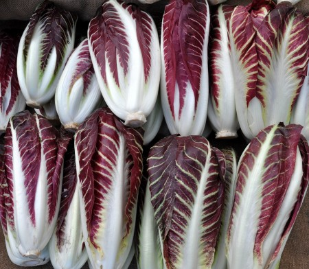 Treviso radicchio from One Leaf Farm. Photo copyright 2013 by Zachary D. Lyons.