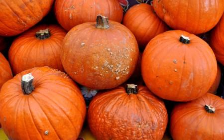 Sugar Pie pumpkins from Oxbow Farm. Photo copyright 2013 by Zachary D. Lyons.