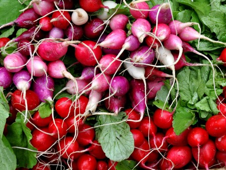 Radishes from Stoney Plains Organic Farm. Photo copyright 2013 by Zachary D. Lyons.