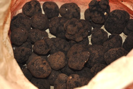 Black truffles from Foraged & Found Edibles. Photo copyright 2013 by Zachary D. Lyons.