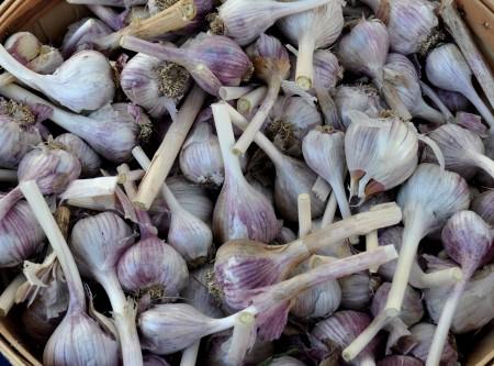 Korean red garlic from Jarvis Family Garlic Farm. Photo copyright 2013 by Zachary D. Lyons.
