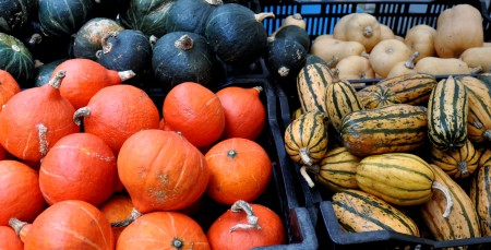 Winter squash from Stoney Plains Organic Farm. Photo copyright 2013 by Zachary D. Lyons.