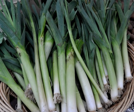 Leeks from Alm Hill Gardens. Photo copyright 2014 by Zachary D. Lyons.