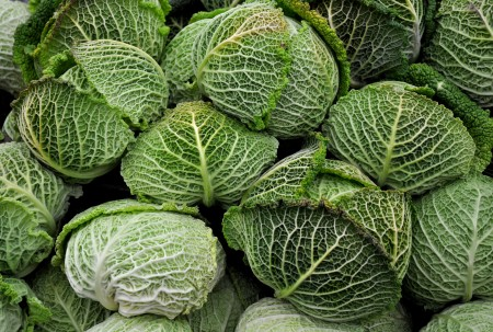 Savoy cabbage from Nash's Organic Produce. Photo copyright 2014 by Zachary D. Lyons.