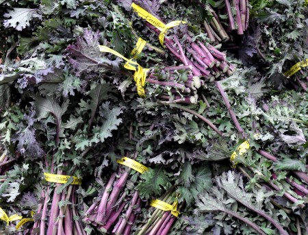 Nash's red kale from Nash's Organic Produce at Ballard Farmers Market. Copyright Zachary D. Lyons.