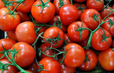 Hot house vine tomatoes from Magana Farms. Photo copyright 2014 by Zachary D. Lyons.