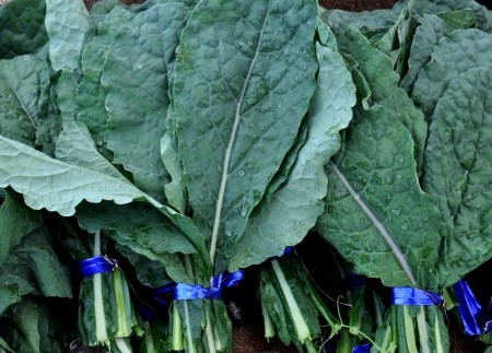 Dino kale from One Leaf Farm. Photo copyright 2014 by Zachary D., Lyons.