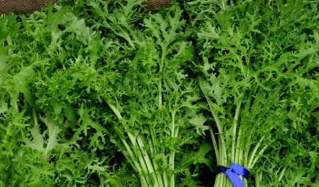 Gold Frills mustard greens from One Leaf Farm. Photo copyright 2014 by Zachary D. Lyons.