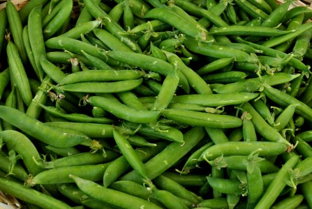 English shelling peas from Alm Hill Gardens. Photo copyright 2014 by Zachary D. Lyons.