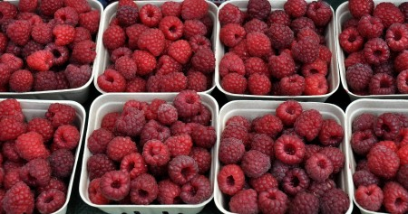 Organic raspberries from Gaia's Harmony Farm. Photo copyright 2014 by Zachary D. Lyons.