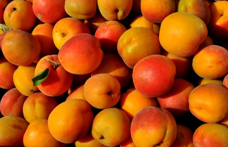 Tomcot apricots from Lyall Farms. Photo copyright 2014 by Zachary D. Lyons.