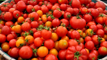 Tomatoes from Colinwood Farm. Photo copyright 2014 by Zachary D. Lyons.