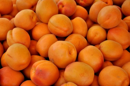 Rival apricots from Collins Family Orchards. Photo copyright 2014 by Zachary D. Lyons.