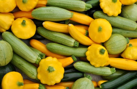 Baby summer squash from Growing Things Farm at Ballard Farmers Market. Copyright Zachary D. Lyons.