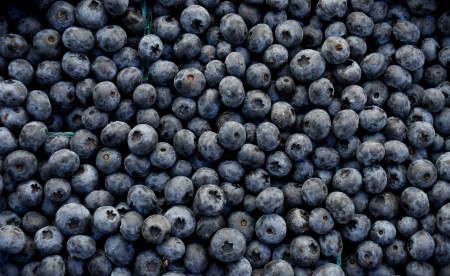Dukes blueberries from Jessie's Berries. Photo copyright 2014 by Zachary D. Lyons.