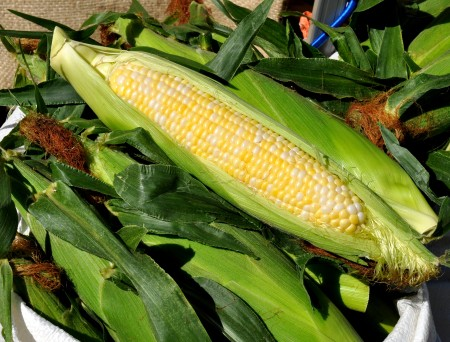 Sweet corn from Lyall Farms. Photo copyright 2014 by Zachary D. Lyons.
