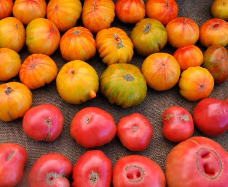 Copia (top) and Brandywine tomatoes from One Leaf Farm. Photo copyright 2014 by Zachary D. Lyons.