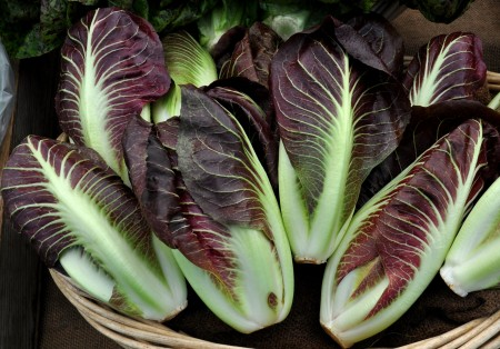 Treviso radicchio from One Leaf Farm. Photo copyright 2014 by Zachary D. Lyons.