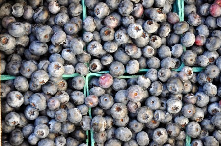 Spartans blueberries from Whitehorse Meadows Blueberry Farm. Photo copyright 2014 by Zachary D. Lyons.