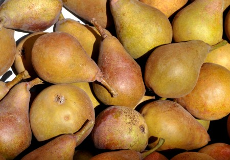 Purple Sensation pears from ACMA Mission Orchards. Copyright Zachary D. Lyons.