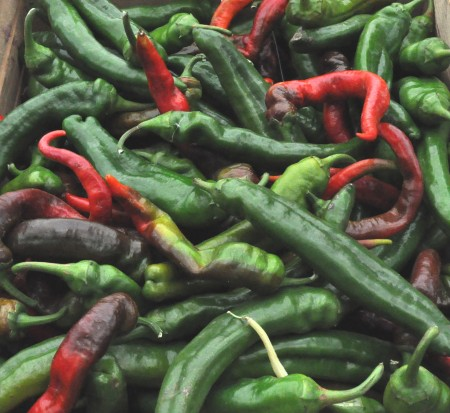 Chile peppers from Boistfort Valley Farm. Copyright Zachary D. Lyons.