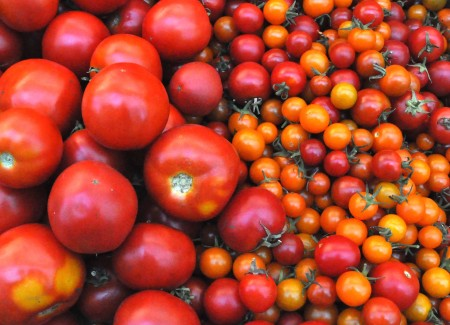 Tomatoes from Colinwood Farm. Copyright Zachary D. Lyons.