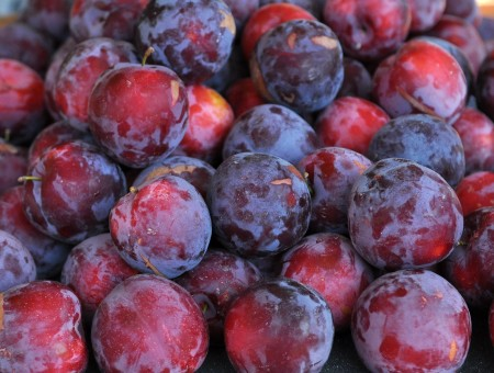 Fortune plums from Collins Family Orchards. Copyright Zachary D. Lyons.