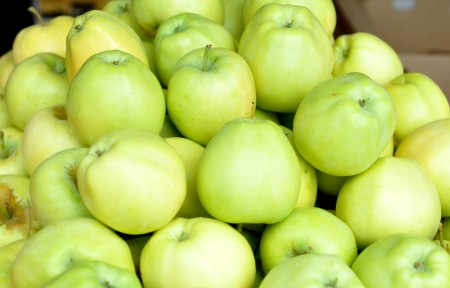 Ginger Gold apples from Collins Family Orchards. Copyright Zachary D. Lyons.