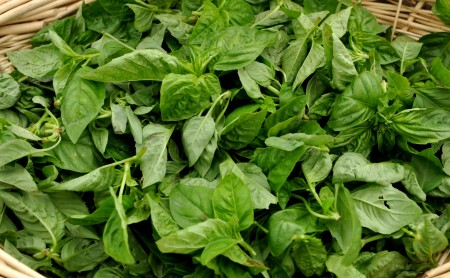 Fresh basil from Growing Things Farm. Copyright Zachary D. Lyons.