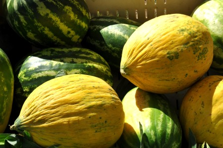 Ginormous melons from Lyall Farms at Ballard Farmers Market. Copyright Zachary D. Lyons.