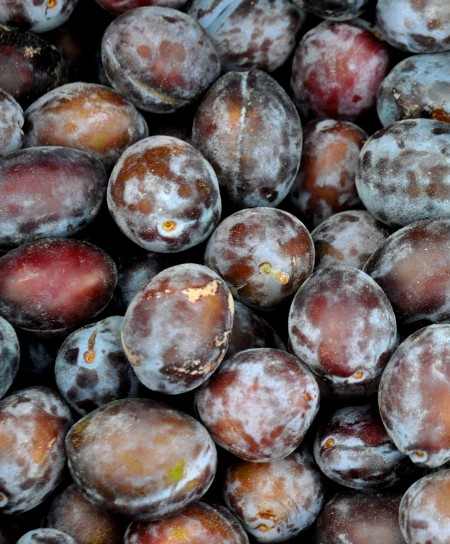 Early Italian prunes from Magana Farms at Ballard Farmers Market. Copyright Zachary D. Lyons.