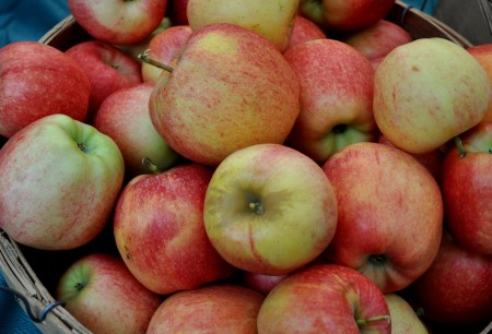 Gala apples from Martin Family Orchards at Ballard Farmers Market. Copyright Zachary D. Lyons.