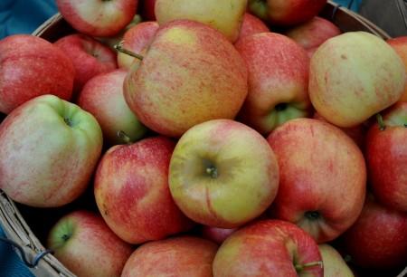 Gala apples from Martin Family Orchards at Ballard Farmers Market. Copyright Zachary D. Lyons.