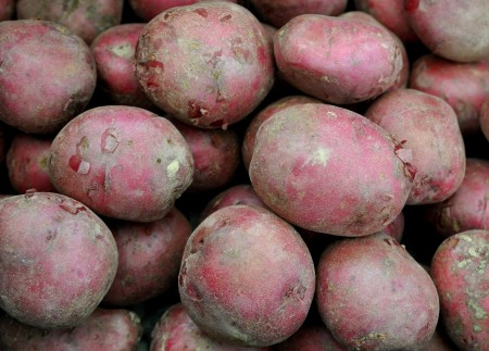 Mountain Rose potatoes from Olsen Farms at Ballard Farmers Market. Copyright Zachary D. Lyons.