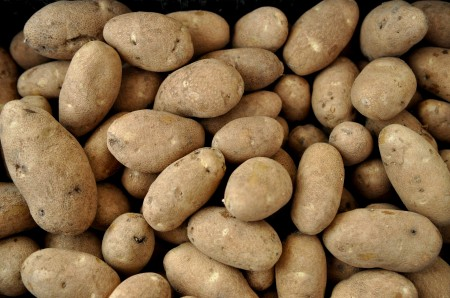Rio Grande Russet potatoes from Olsen Farms. Copyright Zachary D. Lyons.
