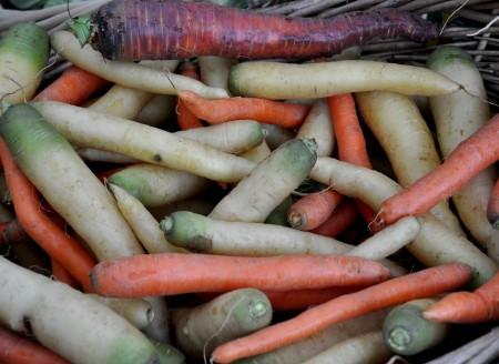 A rainbow of carrots from Oxbow Farm at Ballard Farmers Market. Copyright Zachary D. Lyons.