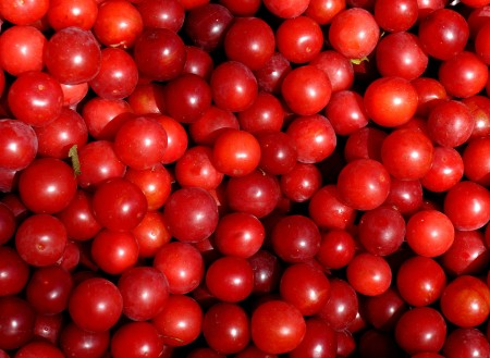 Cherry plums from Tiny's Organic. Photo copyright 2014 by Zachary D. Lyons.