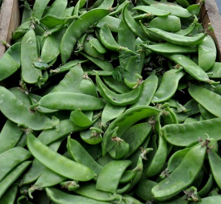 Snow peas from Boistfort Valley Farm at Ballard Farmers Market. Copyright Zachary D. Lyons.