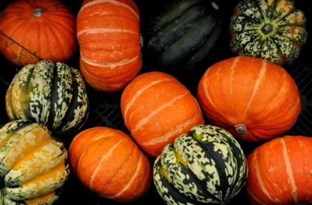 Winter squash from Boistfort Valley Farm at Ballard Farmers Market. Copyright Zachary D. Lyons.